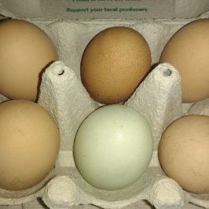 Eggs, Dairy & Cheese